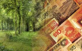 tree money